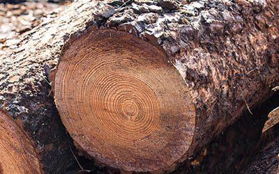 La filière bois 2021 : un contexte sans précédent